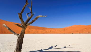 désert_Namib_en_Namibie